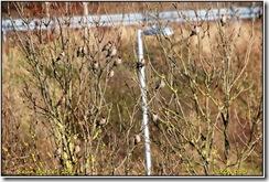 Warwickshire Roadside  D50   14-02-2011 14-04-21
