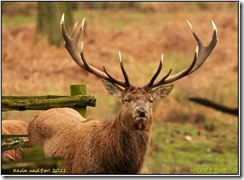 Bradgate Park D300s  05-03-2011 15-31-08