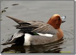 Bradgate Park D300s  27-03-2011 12-17-40
