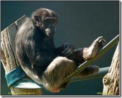 Twycross Zoo D50  01-05-2011 13-12-50