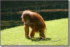 Twycross Zoo D50  01-05-2011 12-41-41