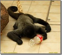 Twycross Zoo D200  01-05-2011 14-39-30