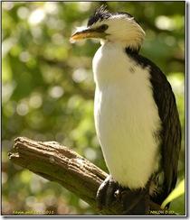 Twycross Zoo D50  01-05-2011 13-53-31