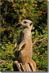 Twycross Zoo D300s X  01-05-2011 15-03-64