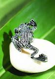 Berebi-Frog.jpg