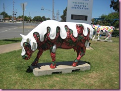 Cows in Shepparton