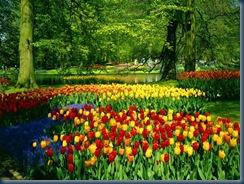 spring_natura-012