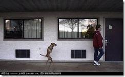 fdog2