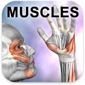Learn Muscles: Anatomy icon