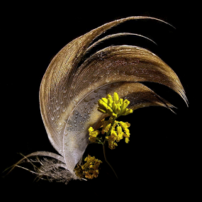 *** by Jurijs Ratanins - Artistic Objects Still Life ( nature, mobilograhy, flowers, light, feather )