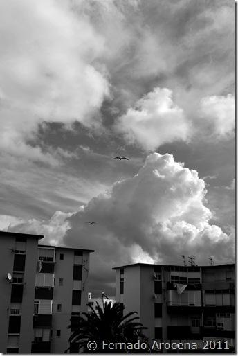 fernando arocena - tormenta 6