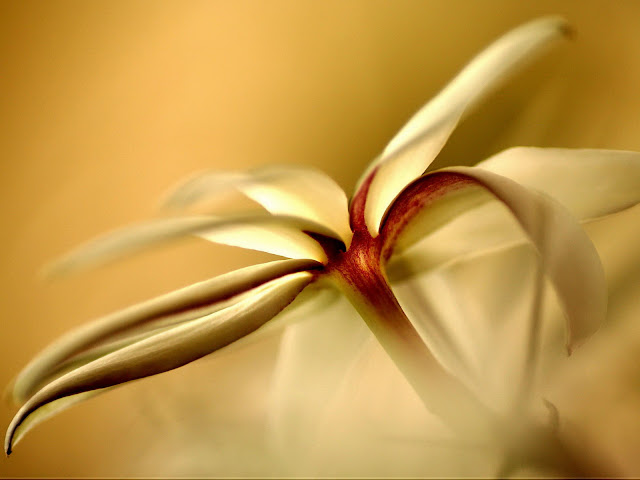 20 Flowers Wallpapers 1600 X 1200