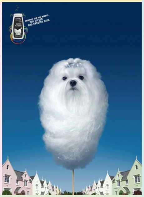 addSweet-white-dog-360x510