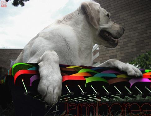jamboree1
