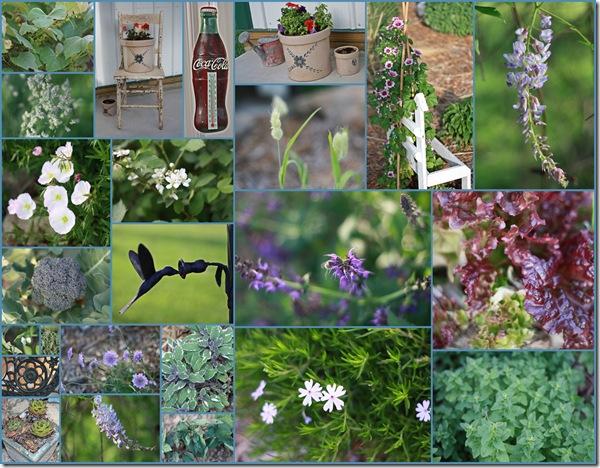 walkabout 5-21-09 lawn_garden_porch