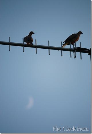 doves_moon1