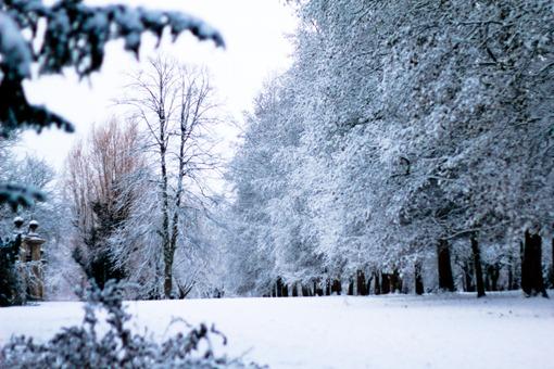 Cambridge Snow-103