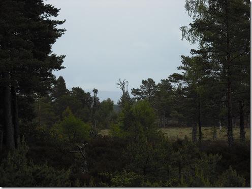 Osprey Nest. Loch Garten