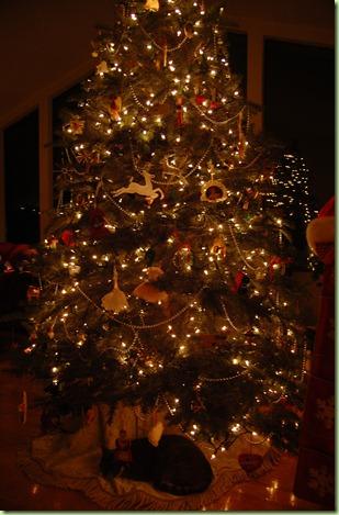 Ladybug newsflash 7 8 foot christmas trees are 39 99 at costco
