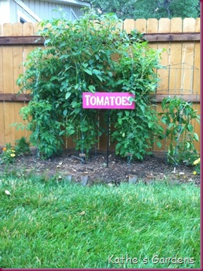 tomatoestomatillosandpeppers
