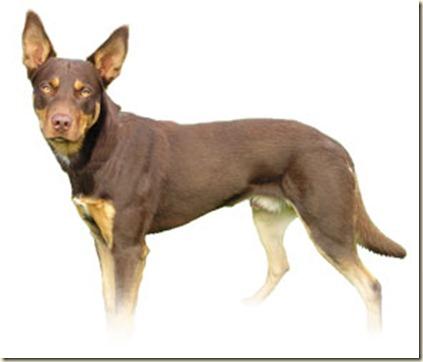 tecnicas-de-adiestramiento-canino