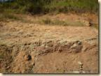 Escavação_fóssil (13)