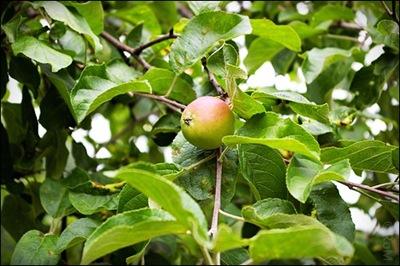 Äpple03
