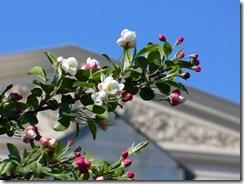 яблони у Большого