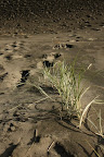Duny u Te Puia