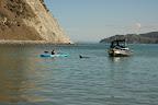 Delfínek témeř u pláže