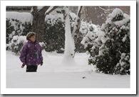 Kutya a hóban - Óbuda, 2010