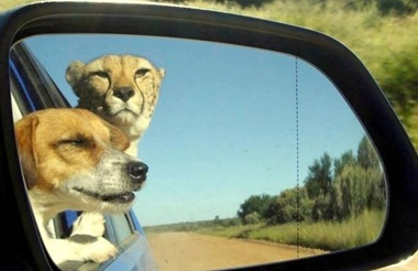 Hey pup, objects in mirror are closer than they appear