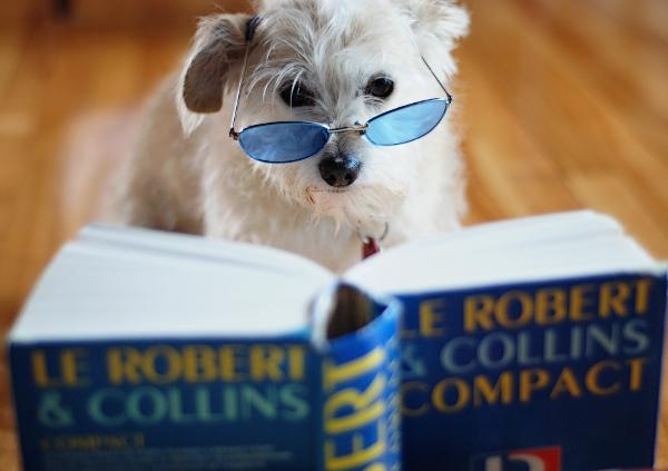 sagesse,chien,livre,nikon,wisdom
