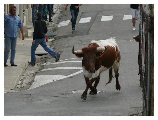 """bous al carrer"" P1190998"