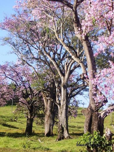 Araguari, a bela do Triângulo Mineiro V-wk