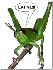 grasshopper_big_green