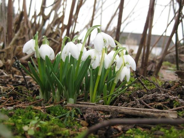 2010-03-28 Hagen på Møll (4)