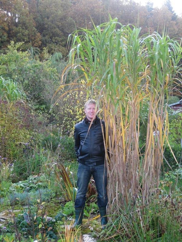 2008-10-19 I hagen (17)