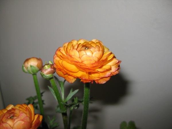 2009-01-11 Planter (7)