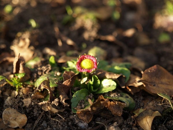 2009-03-21 Mars (212)
