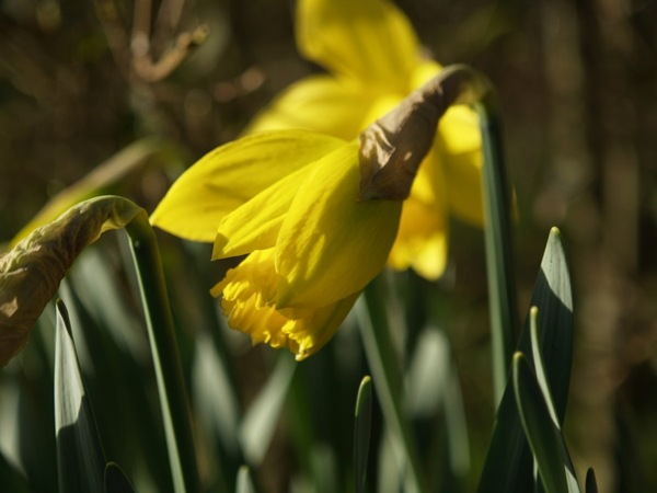 2009-04-09 (13)