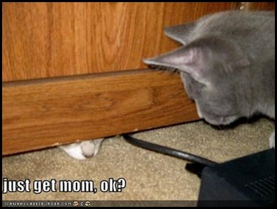 cat under door