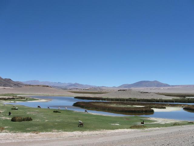 LEJARRETA EN LOS ANDES (2009) 13%2Claguna%20de%20Antofagasta