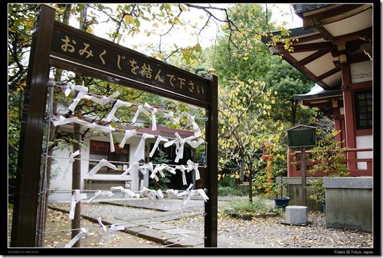 Shibakoen4