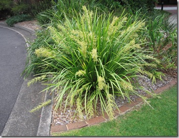Gardendesigns more for Low maintenance grass plants