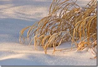 winterform
