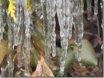 winter 2010 055