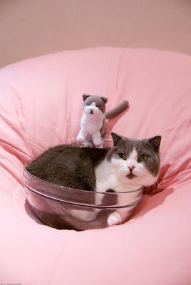 猫カフェ 猫家
