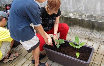 第四周-艾草-蔬菜-(49)