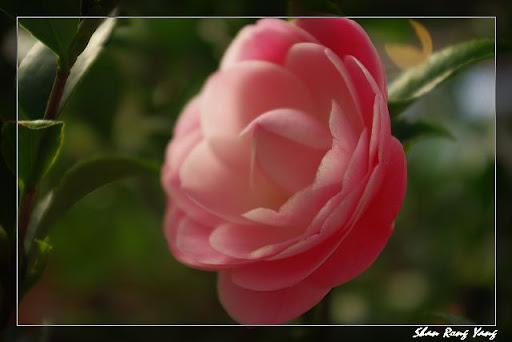 大溪天御花卉